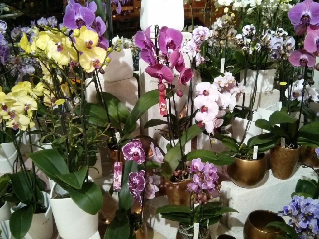 Orchid1 - Kopie